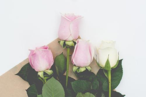roses-web-3